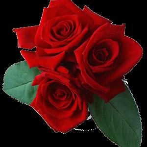 st. Valentines day 2019