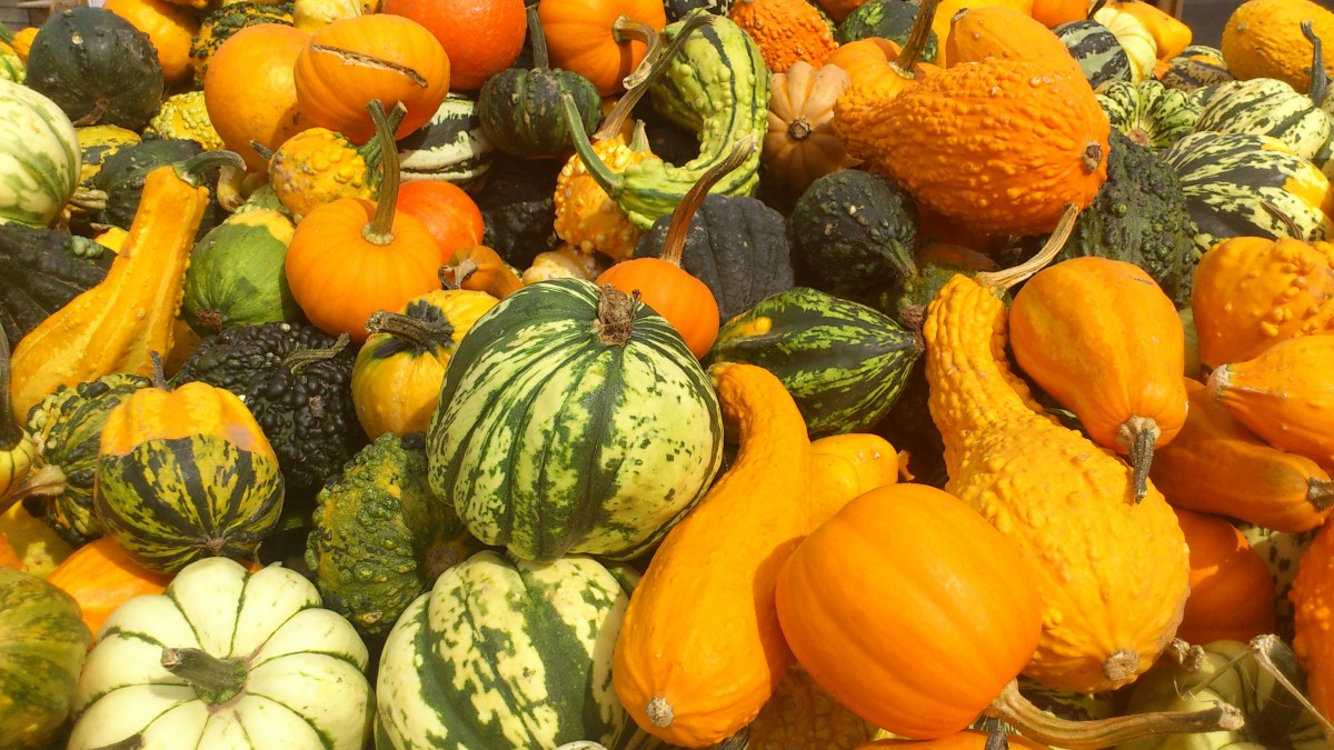 Autumn at Thackeray's...